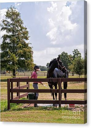 Horse Bathing At City Park New Orleans Canvas Print by Kathleen K Parker