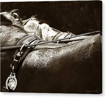Horse Brass Canvas Print by Judy Wood
