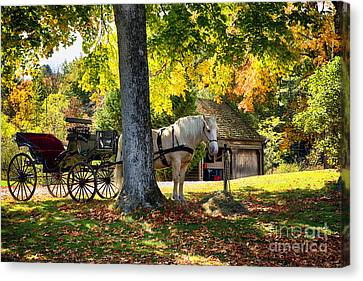 Horse-drawn Carriage Under A Tree In Vermont Canvas Print by George Oze