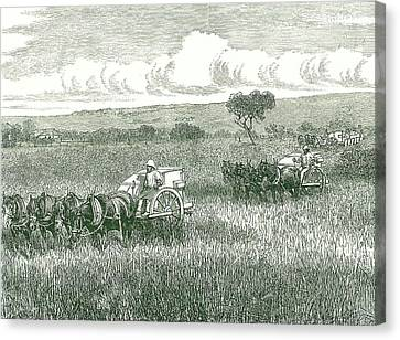 Horse-drawn Mechanical Harvesters Canvas Print by Universal History Archive/uig
