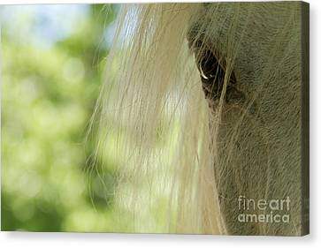 Horse Eye Canvas Print by Christine Sponchia