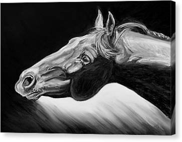 Horse Head Black And White Study Canvas Print by Renee Forth-Fukumoto