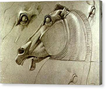 Horse Head Sketch Canvas Print by