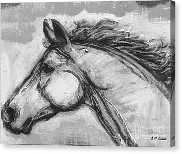 Horse Head Study Canvas Print by Elizabeth Coats