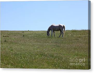 Horse Hill Mill Valley California 5d22664 Canvas Print by Wingsdomain Art and Photography