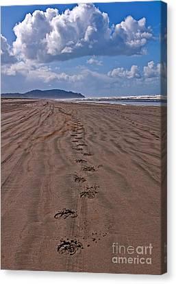 Horse Hoof Tracks On An Empty Beach Long Beach Wa Art Prints Canvas Print by Valerie Garner