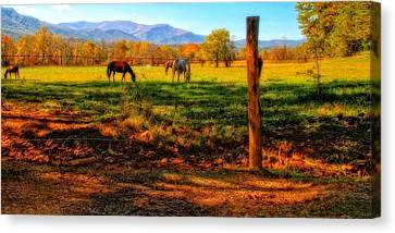 Horse In The Autumn Pasture Canvas Print by Dan Sproul