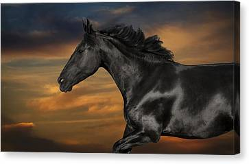 Horse Portrait At Sunset Canvas Print by Wolf Shadow  Photography