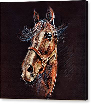 Horse Portrait  Canvas Print by Daliana Pacuraru