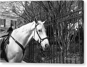 Horse Profile Mono Canvas Print by John Rizzuto