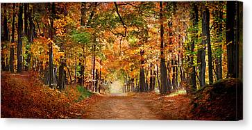 Horse Running Across Road In Fall Colors Canvas Print by Panoramic Images
