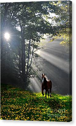 Horse Running In Dandelion Field With Streaming Sunlight Canvas Print by Dan Friend