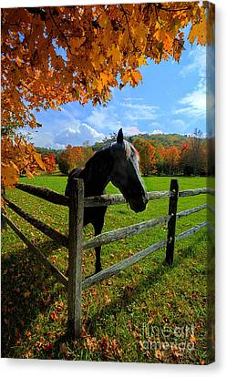 Horse Under Tree By Fence Canvas Print by Dan Friend