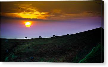 Horsed On The Purple Hillside Canvas Print by William Shevchuk