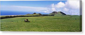 Horses At Feeding At Trough In A Ranch Canvas Print by Panoramic Images