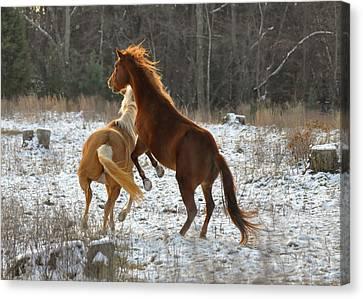Horses At Play - 10dec5690b Canvas Print by Paul Lyndon Phillips