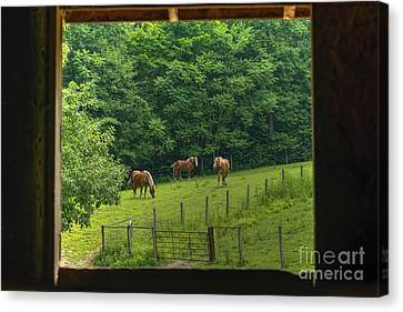 Horses Feeding In Field Canvas Print by Dan Friend