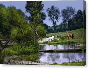 Horses Grazing At Water's Edge Canvas Print by Tom Mc Nemar
