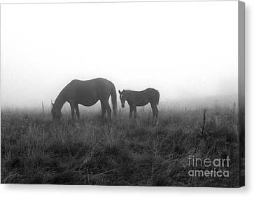 Horses In The Mist Canvas Print by Joanna Cieslinska