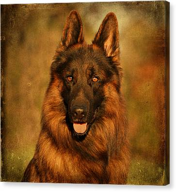 Hoss - German Shepherd Dog Canvas Print by Sandy Keeton