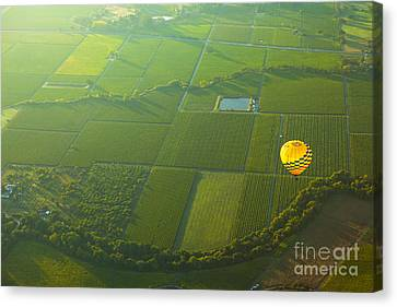 Hot Air Balloon Over Napa Valley California Canvas Print by Diane Diederich