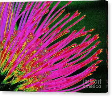 Hot Pink Protea Canvas Print by Ranjini Kandasamy