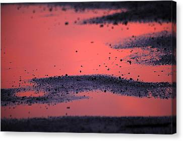 Hot Pink Puddle Canvas Print by Karol Livote