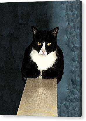 House Cat Canvas Print by Don Allen