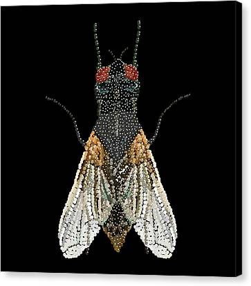 House Fly Bedazzled Canvas Print by R  Allen Swezey