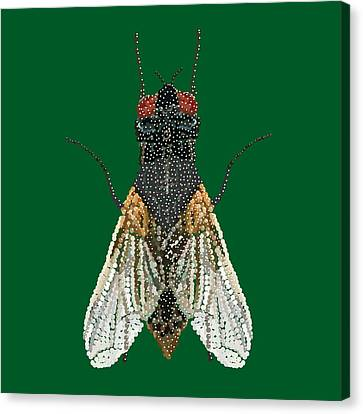 House Fly In Green Canvas Print by R  Allen Swezey