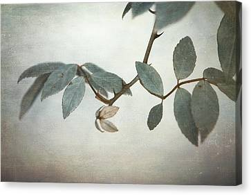 How Delicate This Balance Canvas Print by Laurie Search