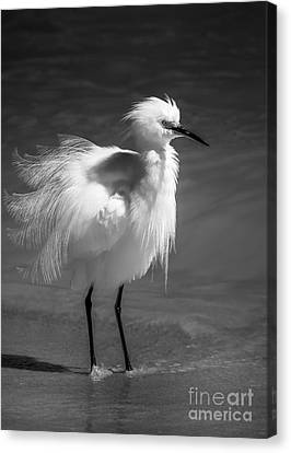 How Do I Look- Bw Canvas Print by Marvin Spates