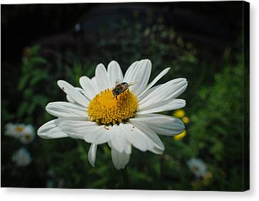 How Doth The Little Busy Bee Canvas Print by Laura Pineda