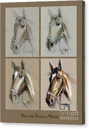 How To Draw A Horse Portrait Canvas Print by Daliana Pacuraru