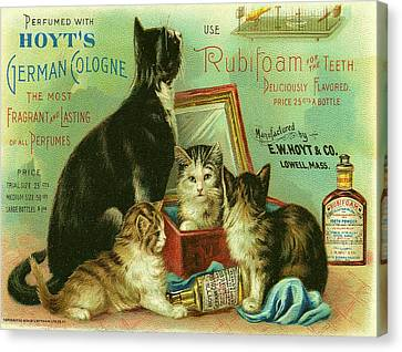 Hoyts Cats Canvas Print by Georgia Fowler