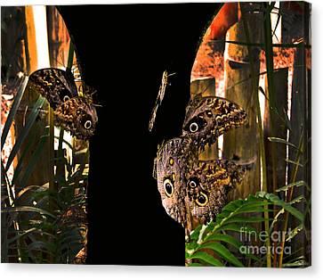 Huge Butterflies In Mindo Canvas Print by Al Bourassa
