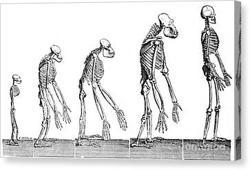 Human Evolution 1883 Canvas Print by British Library