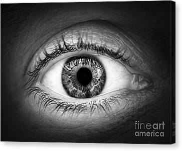Human Eye Canvas Print by Elena Elisseeva