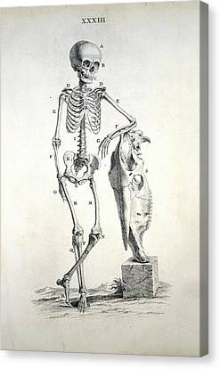 Human Skeleton Canvas Print by British Library