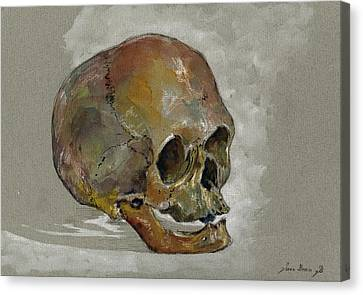 Human Skull Study Canvas Print by Juan  Bosco