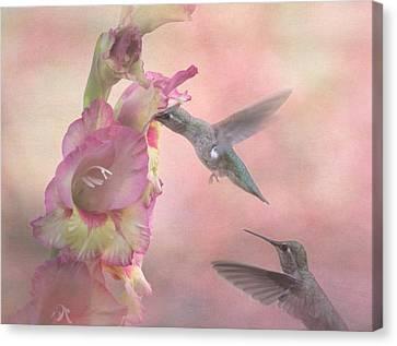 Humming Gladiola Canvas Print by Angie Vogel
