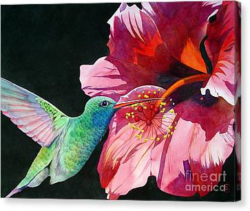 Hummingbird And Hibiscus Canvas Print by Robert Hooper