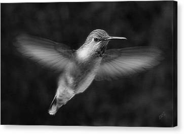 Hummingbird Canvas Print by Ben and Raisa Gertsberg
