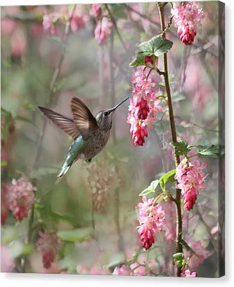 Hummingbird Heaven Canvas Print by Angie Vogel