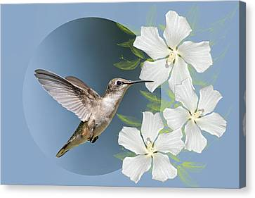 Hummingbird Heaven Canvas Print by Bonnie Barry