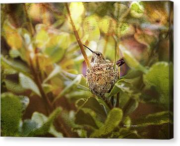 Hummingbird Mom In Nest Canvas Print by Angela A Stanton