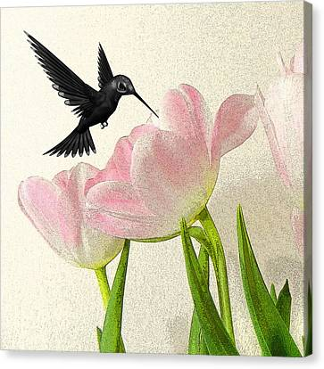 Hummingbird Canvas Print by Sharon Lisa Clarke