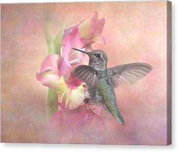 Hummingbirds Gladiola Canvas Print by Angie Vogel