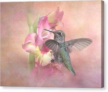 Hummingbirds Gladiola Canvas Print by Angie Vogel