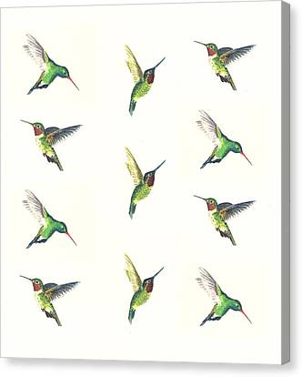 Hummingbirds Number 2 Canvas Print by Michael Vigliotti
